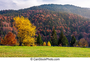 trees on grassy meadow in autumn. lovely scenery of a park...