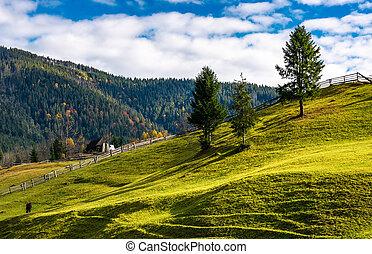 trees on grassy rural hillside. wonderful sunny autumn day...