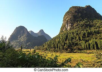 Trees on limestone rocks in a valley