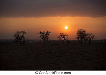 Trees on meadow at sunset with sun