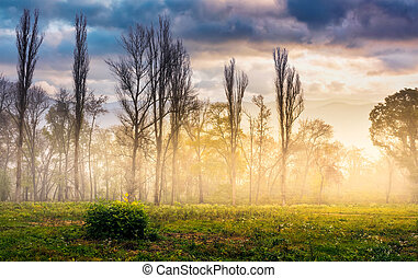 trees on meadow in mountains at foggy sunrise - foggy...