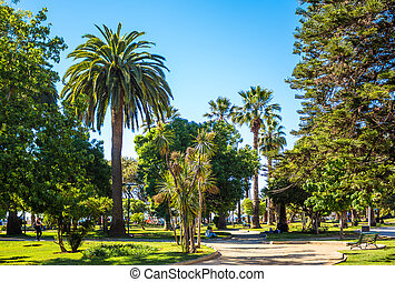 Trees on Plaza Colombia in Vina del Mar, Chile
