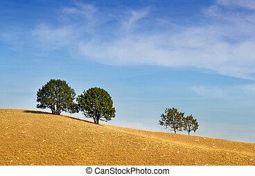 Trees on sand dunes