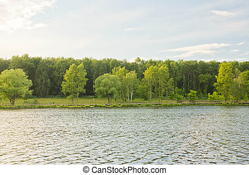 trees on shore of a pond on a sunny day