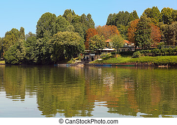 Trees on the bank of Po river in Turin, Italy.