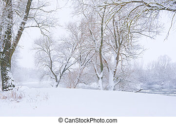 trees on the bank of the river in snowfall