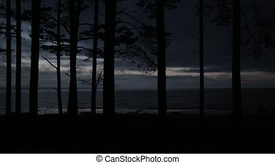 Trees on the beach in the evening