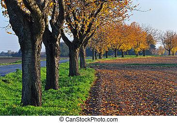 Trees on the edge of field in autumn sun.