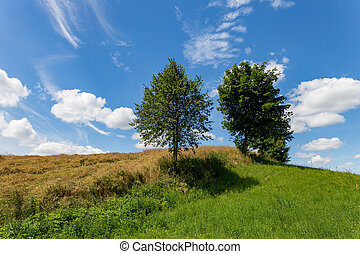 Trees on the field against the blue sky.