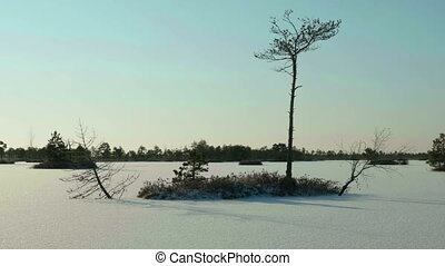 Trees on the frozen lake. Clean and frosty daytime. Smooth dolly shot