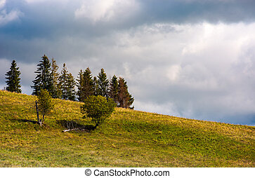 trees on the grassy hillside on an overcast day. beautiful...