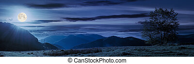 trees on the grassy meadow at night - panorama of a...