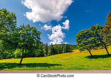 trees on the grassy meadow by the road in summer. beautiful...