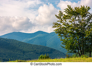 trees on the grassy meadow in mountains - tree on the grassy...