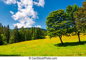 trees on the grassy meadow in summer. beautiful landscape...