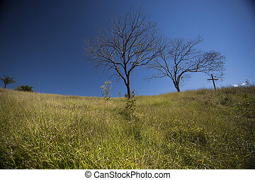 Trees on the hill under a blue sky