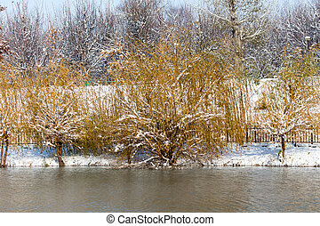 trees on the lake in winter