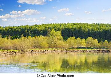 Trees on the lake shore
