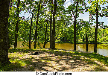 Trees on the shore of a forest lake
