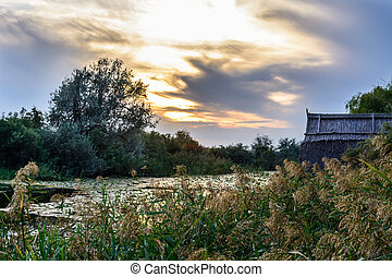 Trees on the shoreline of a stream. Vertical view of trees and a rustic house in a summer evening, with cloudy background.