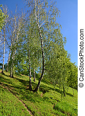 Trees on the slope in Eco Shore Park in Khimki, Russia - ...