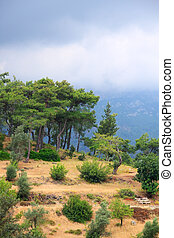 Trees on the slope of mountain