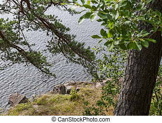 Trees on the steep rocky shore of the lake