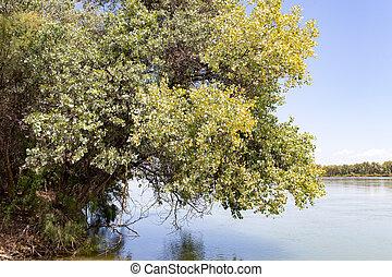 trees on the Syr Darya River. Kazakhstan