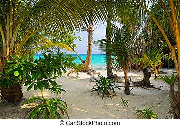 Trees on tropical beach