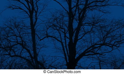 Trees On Windy Night In Winter