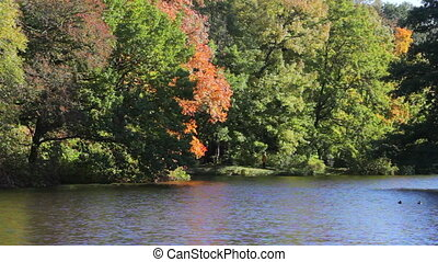Trees over the pond in the autumn