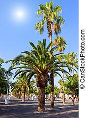 trees palm plantation