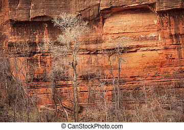 Trees Red Rock Canyon Walls Temple of Sinawava Zion Canyon National Park Utah Southwest