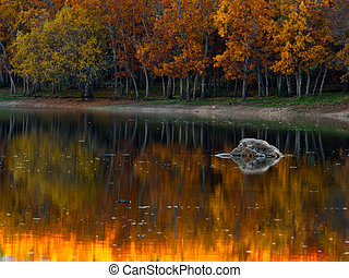 Trees reflated with explosion of color in the water