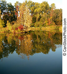 Trees reflected in a pond