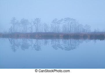 trees reflected in lake and dense fog