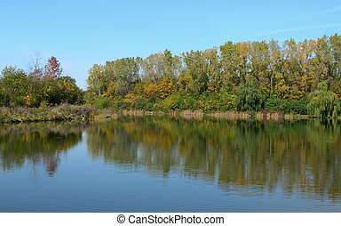 Trees reflected in pond
