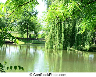 Trees reflected in water