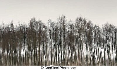 Trees reflected in water background loop ready file