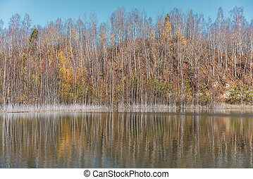 Trees reflecting in a lake surface