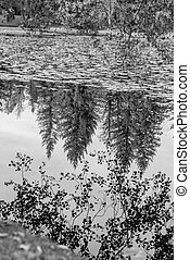 Trees reflecting on lake in autumn