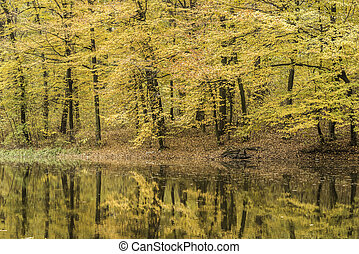 Trees reflection in a forest lake during autumn time