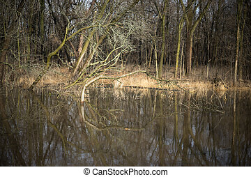 Trees reflection in a water