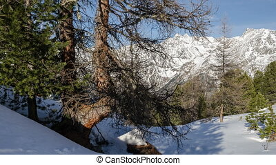 Trees Shadows Moving over Snow in Winter Alps Mountains Dolly Shot Time Lapse