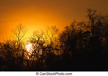 trees silhouette at sunset