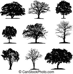 Trees silhouette