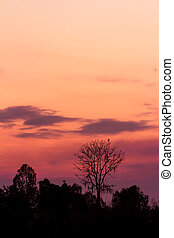 trees silhouette on beautiful sunset background