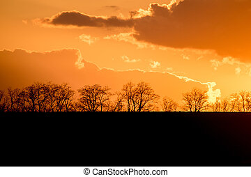 Trees silhouettes at sunset