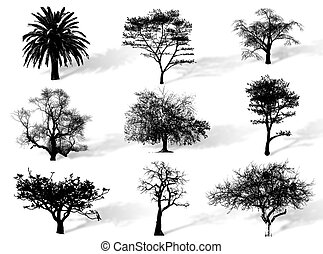 Trees silhouettes to represent different species in nature