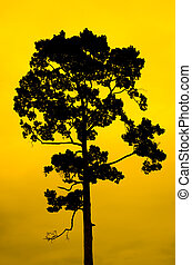 Trees silhouettes with background dark sky.